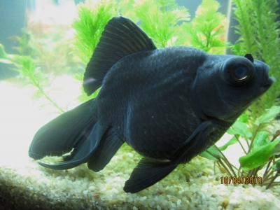 Un aquarium feng shui for Ou placer aquarium poisson rouge