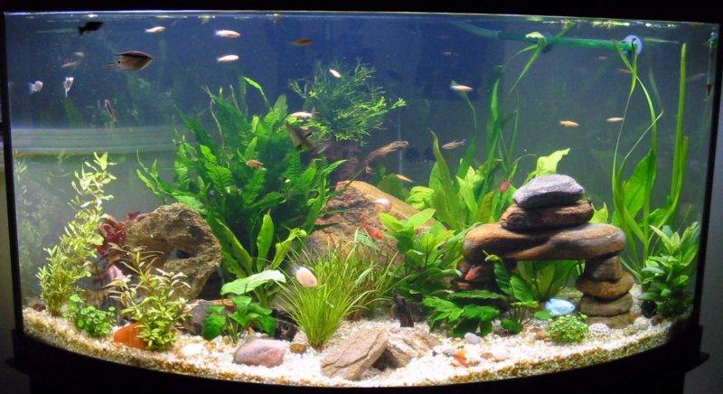 boule oxygène aquarium
