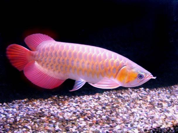 Un aquarium feng shui - Comment le feng shui peut ameliorer votre maison et votre sante ...