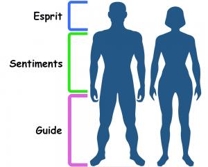 chi vertical corps humain