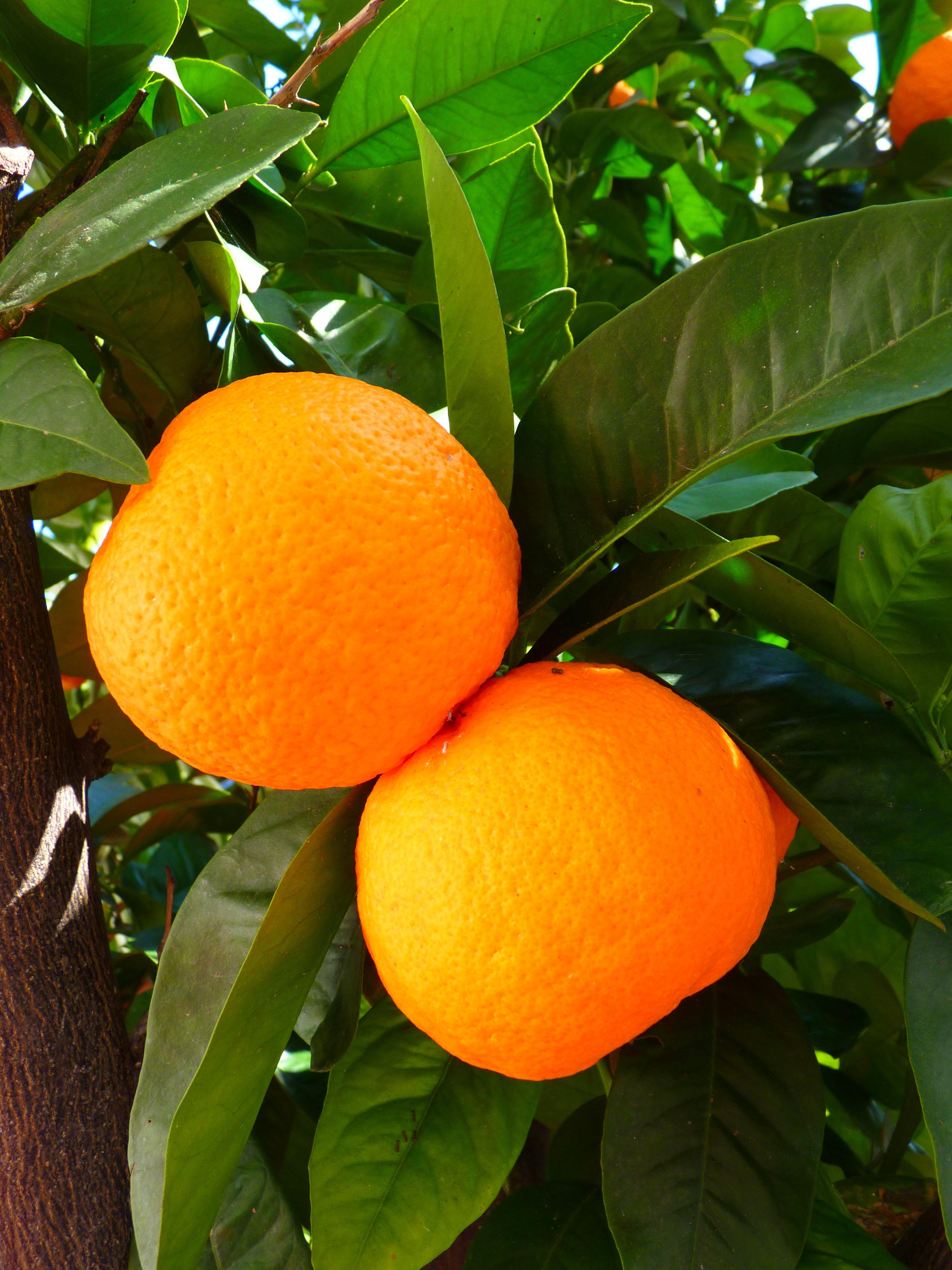 images feng shui - lefengshuifacile.com - oranges